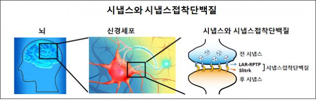 신경세포와 신경세포를